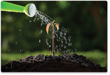 Use water mixed with Grow Better Plant Starter